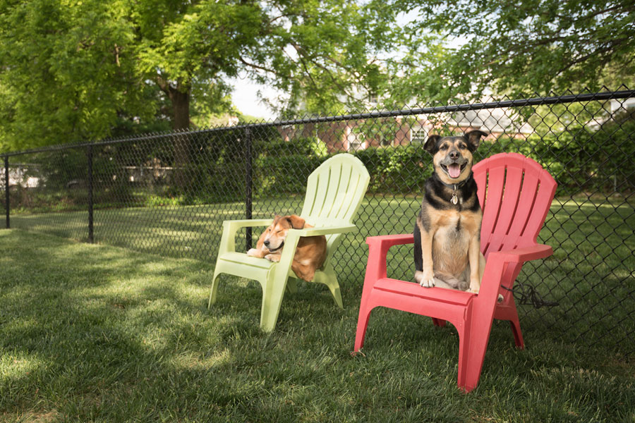 two dogs relaxing on outdoor furniture at the pet-friendly Edge of Yardley apartments in Yardley PA