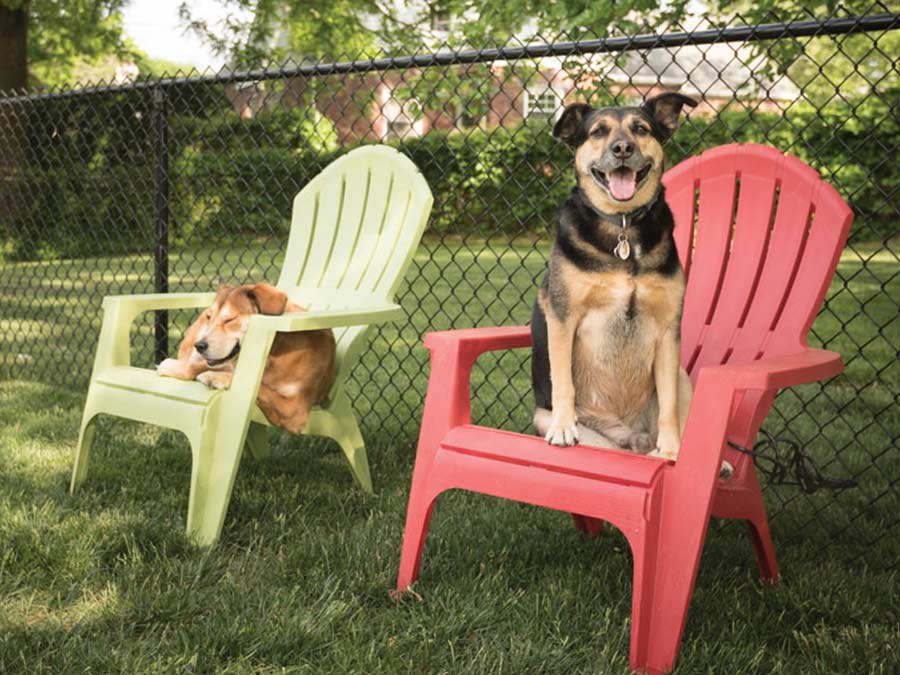 The Ridge Apartments dogs sitting on adirondack chairs in dog park